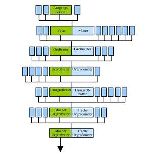 Aufbau eines Stammbaums